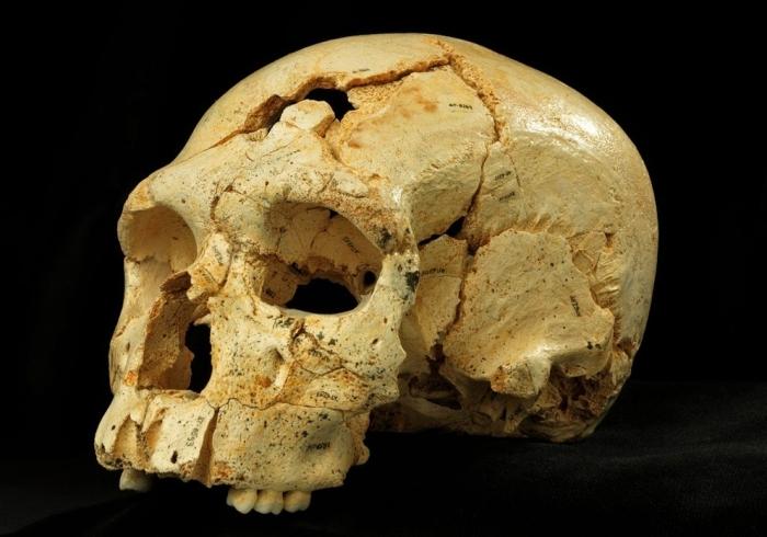 Crani 17 descobert a la Sima de los Huesos, a Atapuerca. / Javier Trueba