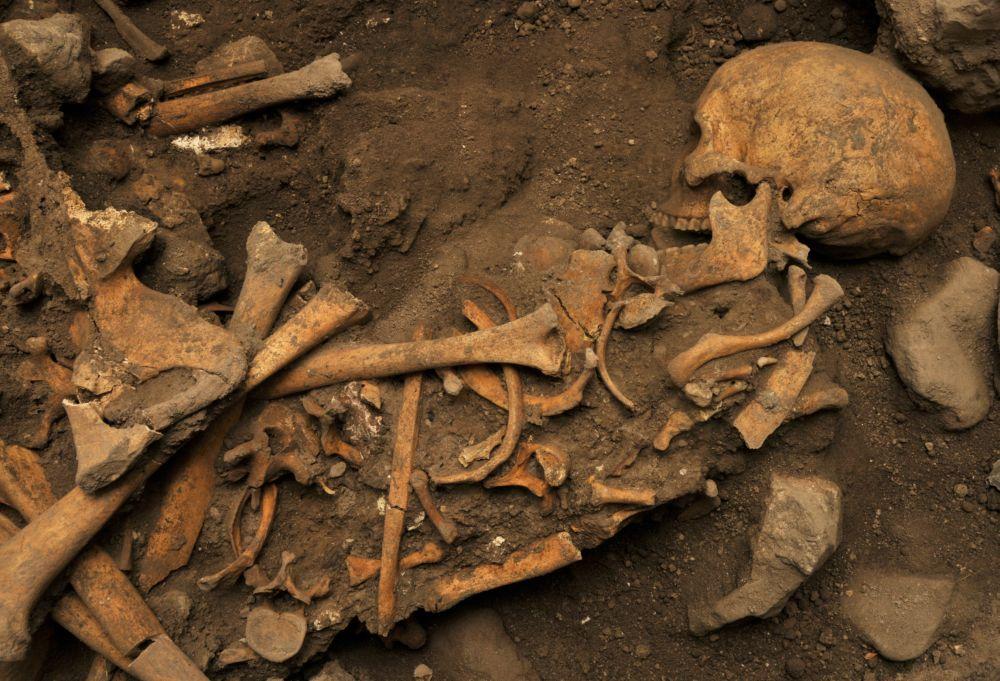 Restes d'homínids trobats a la Cueva El Mirador, a Atapuerca