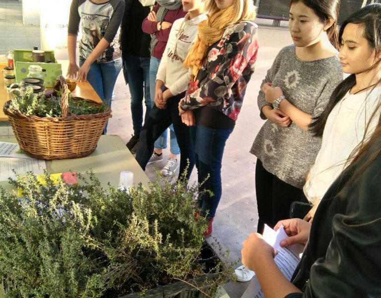 Students learnt about the culinary and medicinal properties of Mediterranean plants.