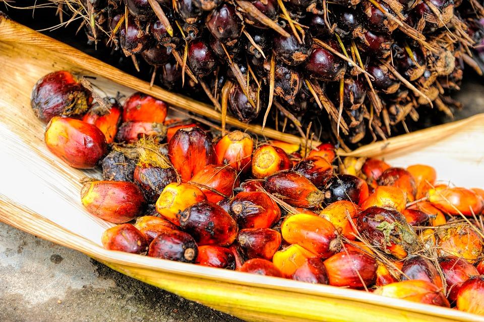 El número de plantaciones de palma industrial se ha multiplicado en los últimos años.