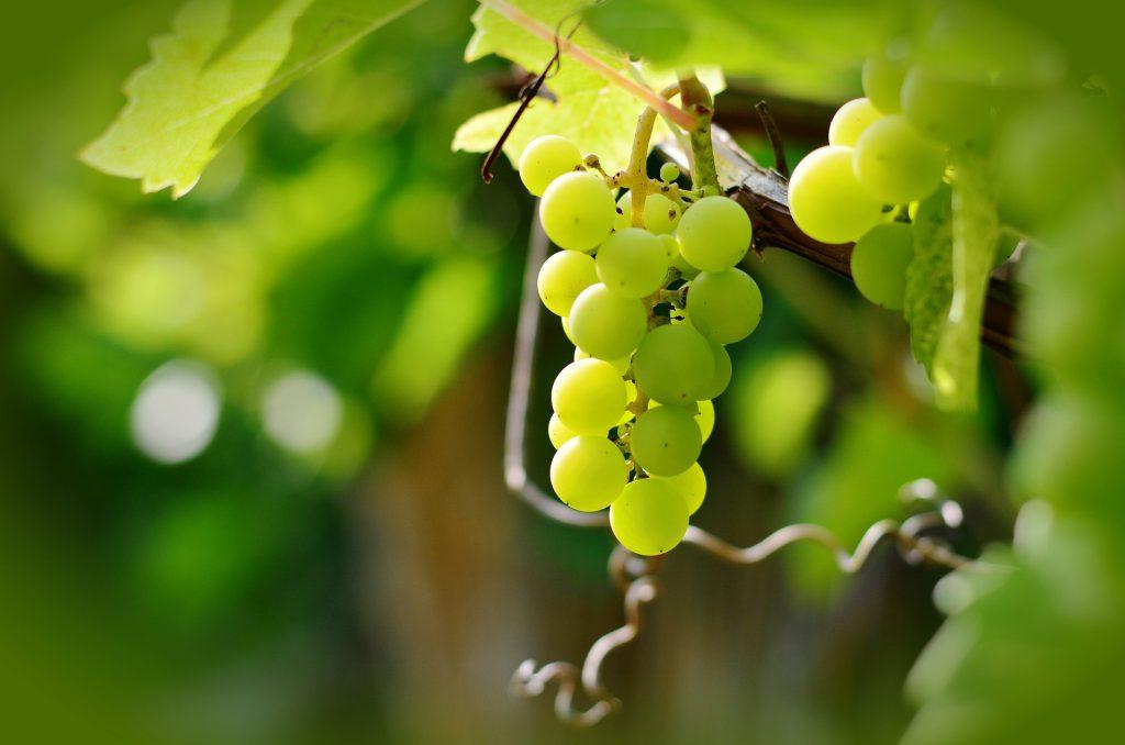 Los componentes de extracto de hueso de uva pueden hacer disminuir la secreción de una hormona que transmite al cerebro la sensación de hambre.