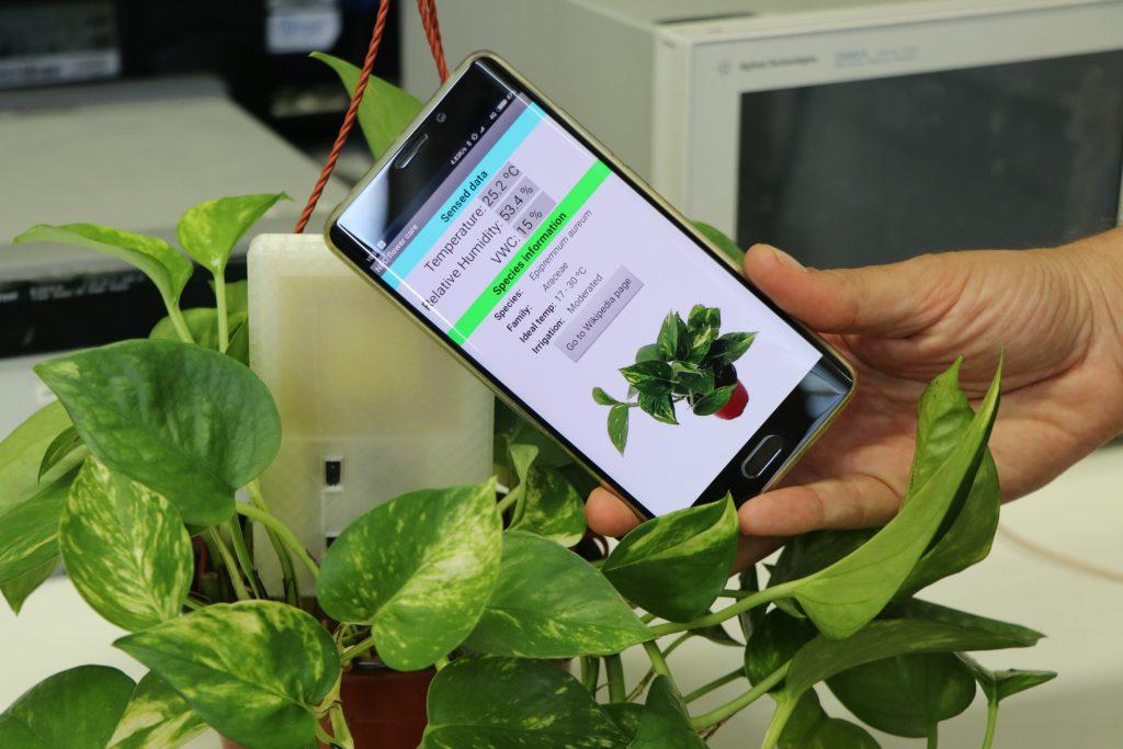 El sensor es clava al terra de la planta o cultiu i envia les dades al telèfon mòbil.